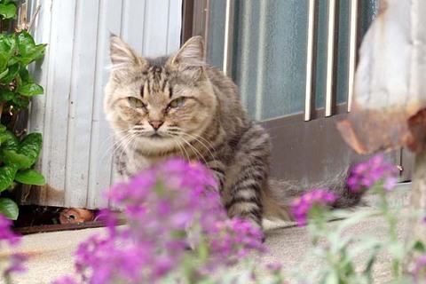 日替り猫定食5
