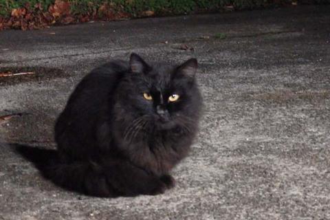 動画黒猫現わる