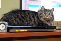 フライング猫の日アタック222