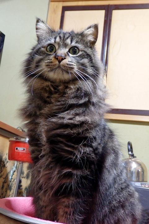 猫の日大抽選会
