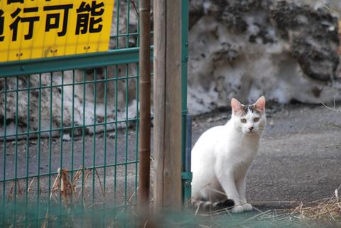 庄内鶴岡猫散歩其の4