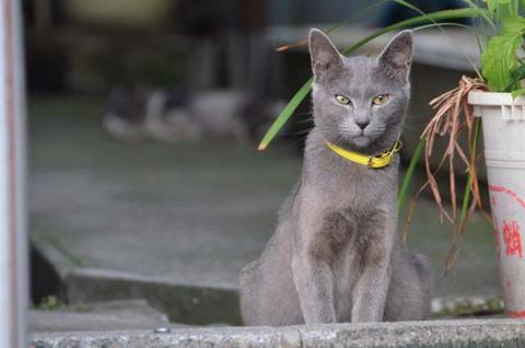 マイブルーム36回目猫