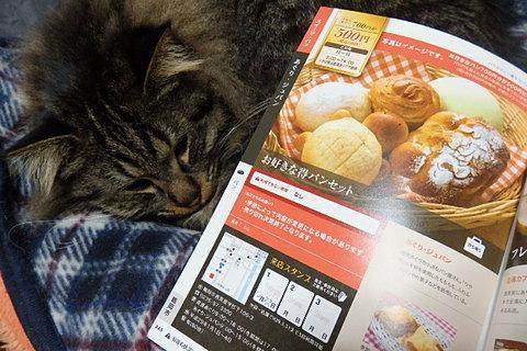 ブルーム9軒目猫パン