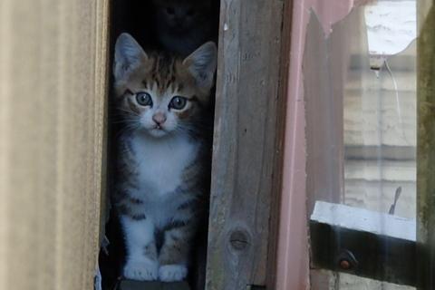 ちび猫軍団現る!の巻
