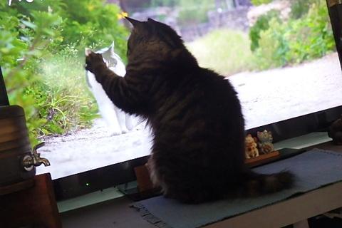 から揚げ弁当猫