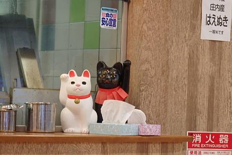 マイブルーム34軒目猫