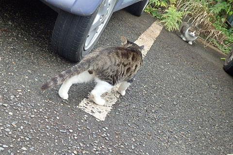 ドス猫カツカレー