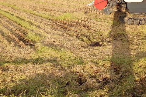 稲刈りオワタ