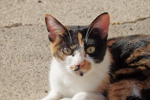 三毛猫カレーセット