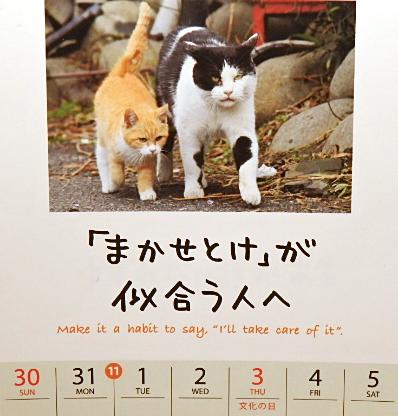 日替り猫定食7