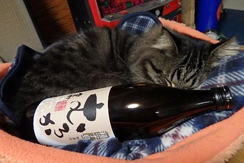 そば祭~猫屋敷