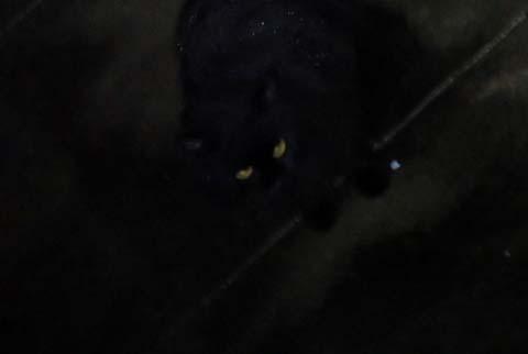 食い逃げ大阪出発の朝猫