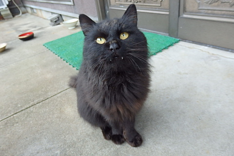 黒猫さ根負げした。