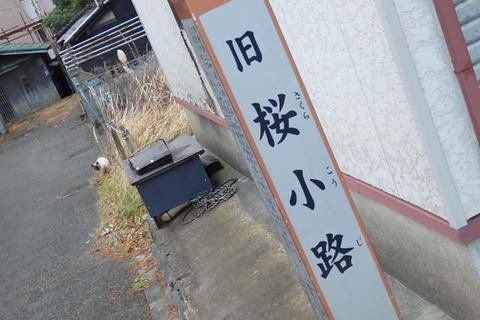 酒田スタバ鶴岡猫