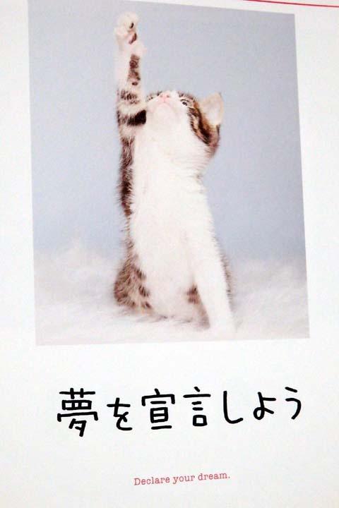 猫イモ天~護国神社