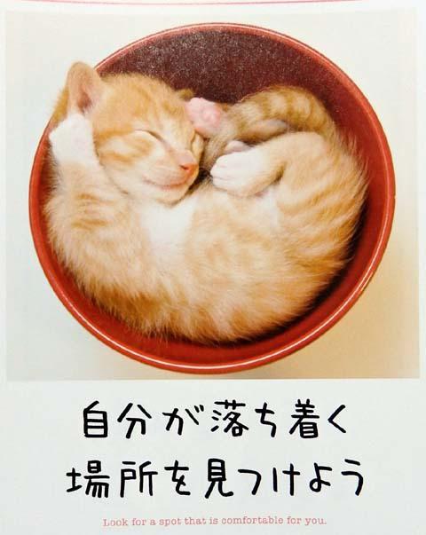 猫エサ寒鱈日和2