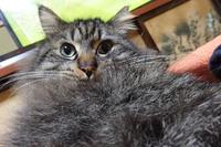 ブルーム16軒目米米お菓子猫