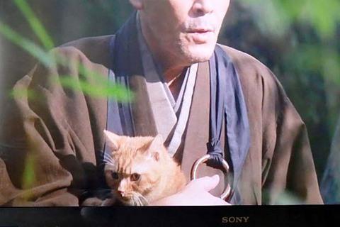 おんな城主猫虎「NHK大河ドラマ」