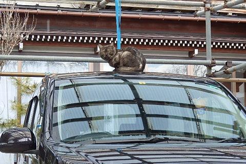 鶴岡猫庄内ニャン組其の1