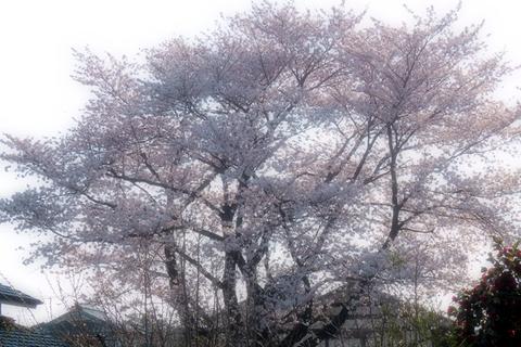 肉うどん桜にゃんこ