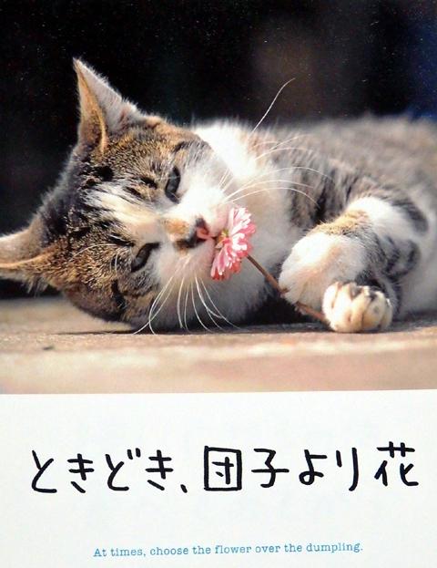桜動画鶴岡馬渡猫