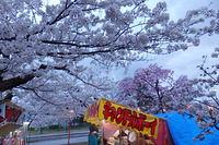 桜花見焼餅ケバブ