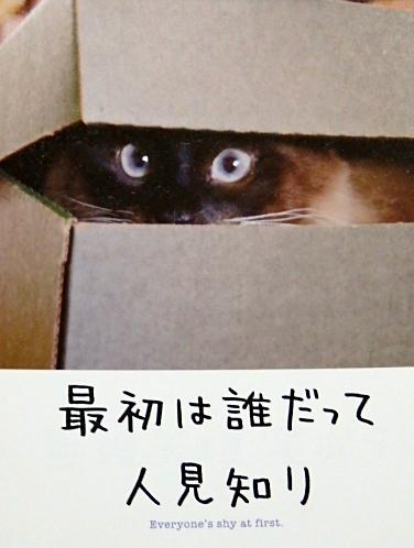 ラーメン大盛り黒猫