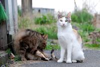 漁港猫日本海2
