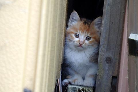 チビ猫タワー