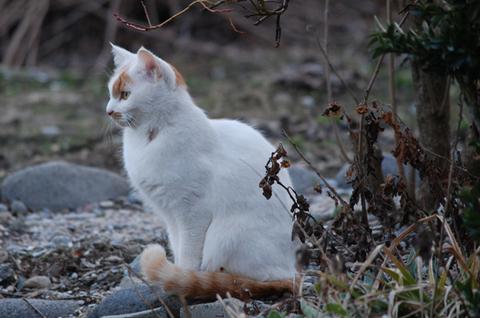 庄内猫活鶴岡ニャンコ
