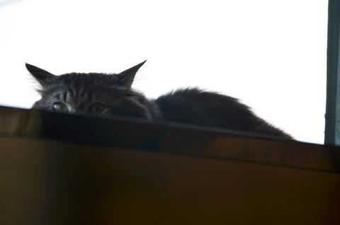 マルゲリータ猫