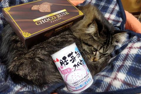 ブルーム25軒目ラーメン猫