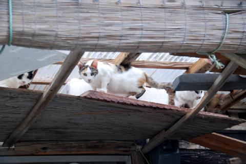 漁港猫日本海1