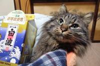 幻のクリームパン猫