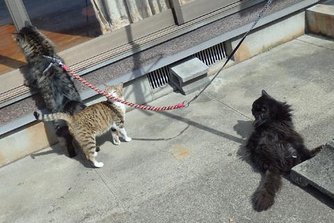 アンジュチビタン黒猫
