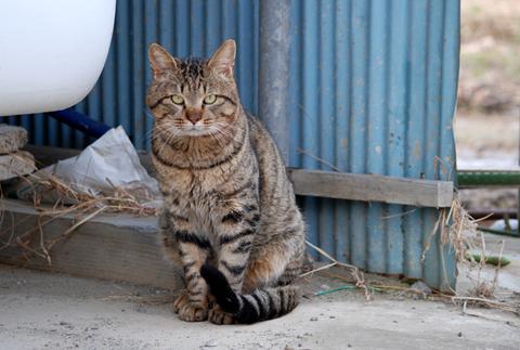 庄内猫放浪記5
