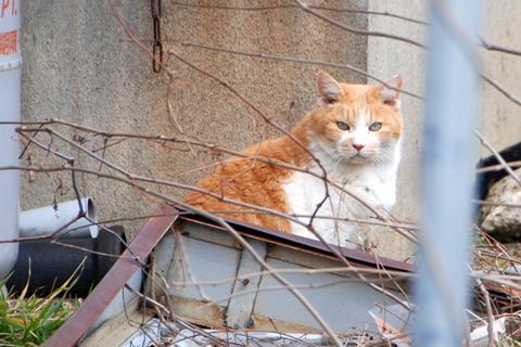 庄内猫活クラブ