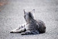 庄内猫放浪記2 2017/03/07 11:17:59