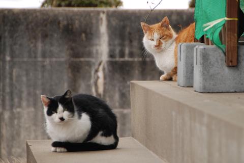 鶴岡猫庄内ニャン組其の6其の7