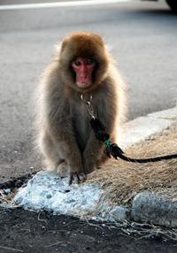 庄内猿組モンキー麺活