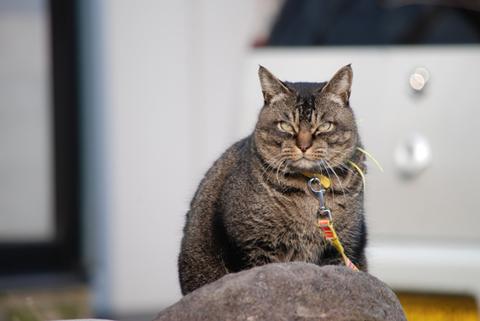 庄内猫放浪記4