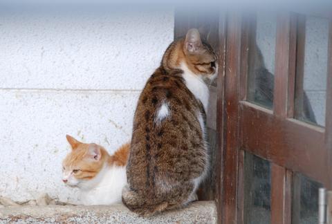 庄内鶴岡猫散歩其の3