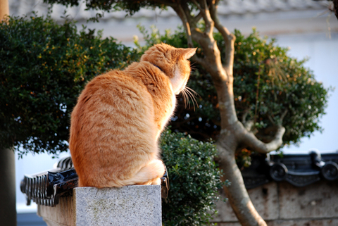 春猫チャトラン白