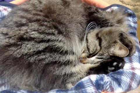 焼肉中華ラーメン猫