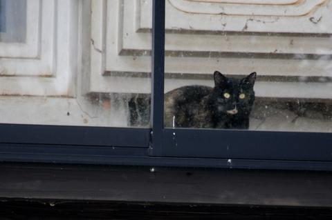 庄内猫放浪記1