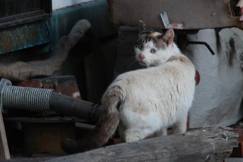徳島ラーメン猫人生
