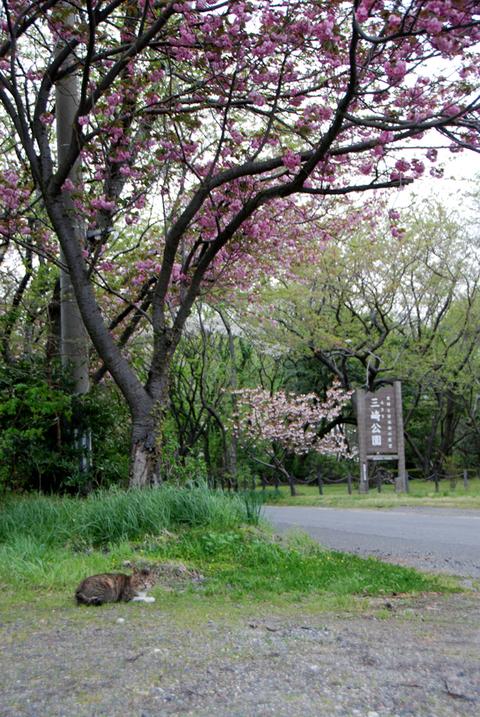 桜にゃんこ三崎公園