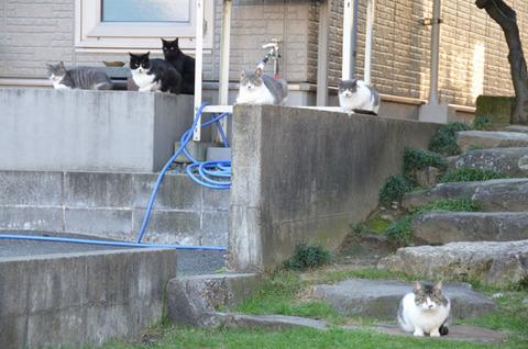 1回6猫カメラ