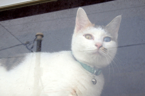 猫と神楽橋公園