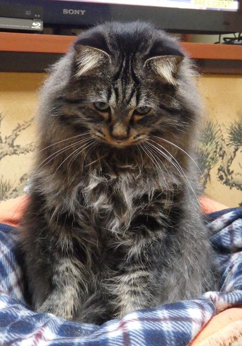 ブルーム14軒目みそラーメン猫
